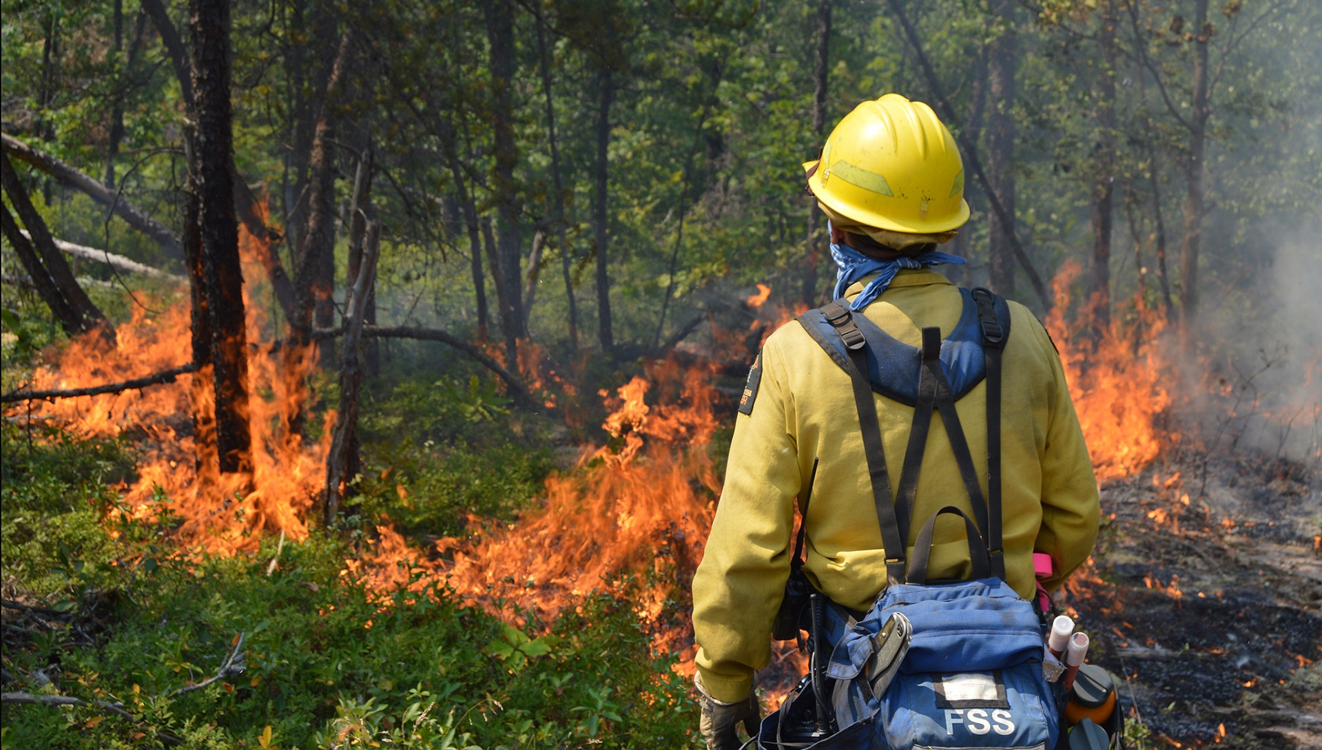 Este detector de incendios forestales funciona con el movimiento de las ramas