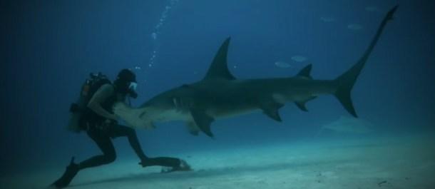 el hombre frente al tiburon documental movistar+ national geographic