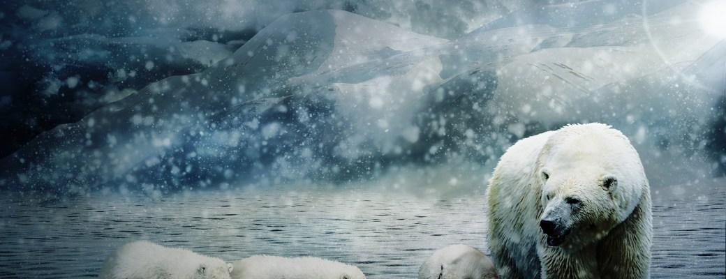 osos polares calentamiento global hielo derretimiento polos