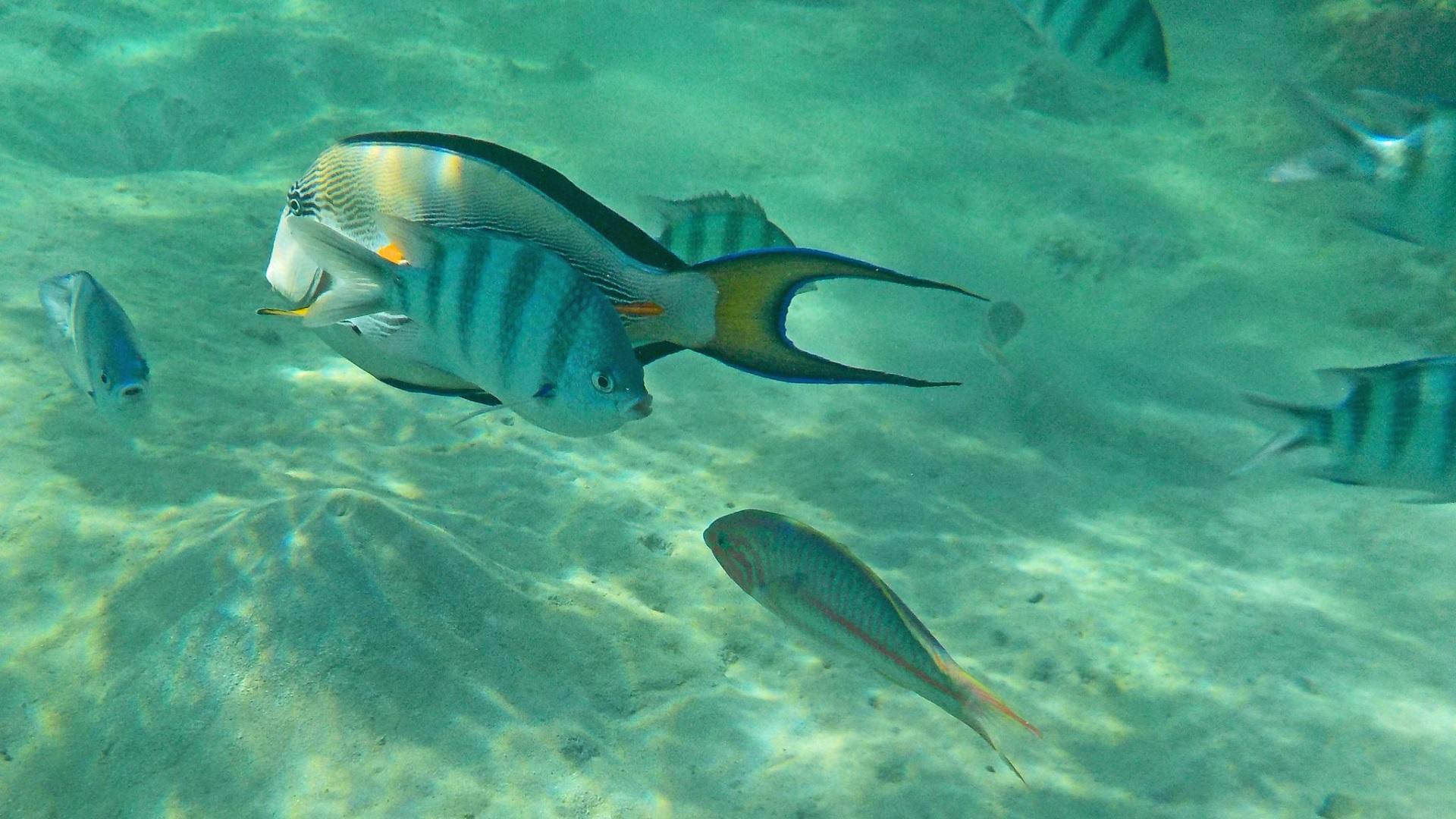 Cómo el 60% de las especies de peces podría desaparecer en el 2100