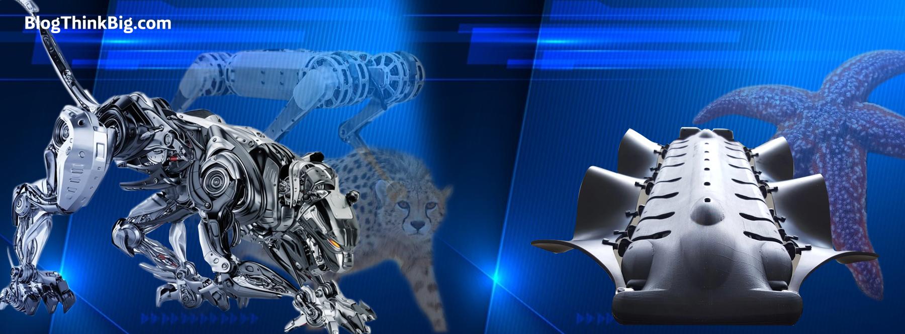 ¿Qué tienen en común los robots, los guepardos y las estrellas de mar?