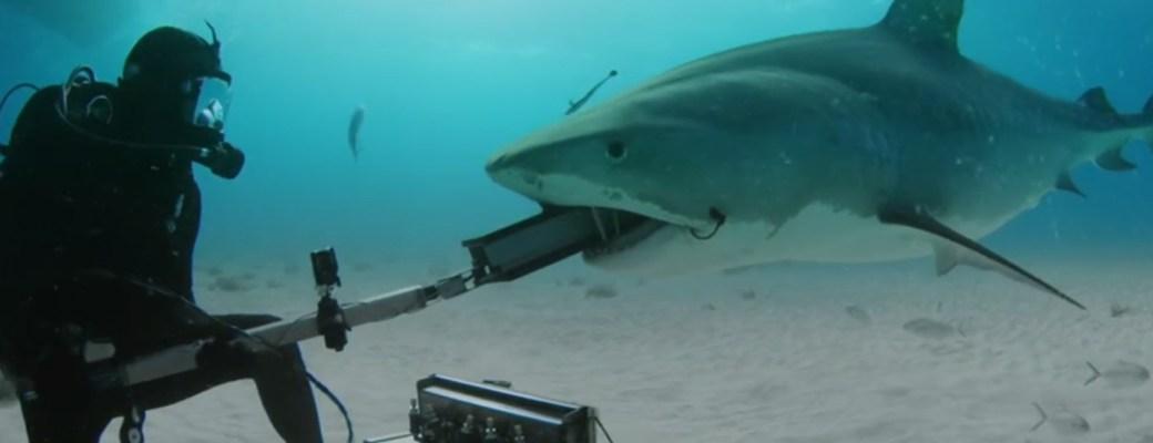 proteccion tiburones traje jeremiah sullivan shark suit carbono