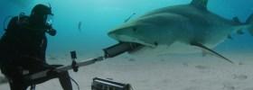 El biólogo que se juega la vida entre tiburones para encontrar el traje perfecto