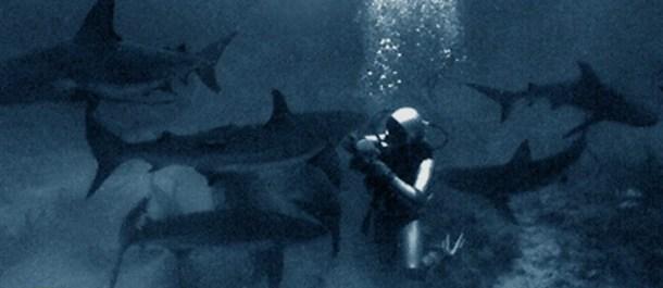 tiburones-jeremiah-sullivan