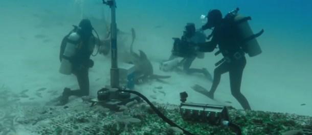 documental salvaje national geographic bahamas