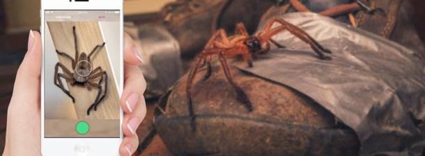 Critterpedia, un Shazam para identificar arañas y serpientes en Australia con una sola foto