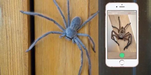 aranas-australia-shazam-critterpedia
