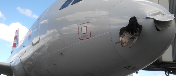 avion-choque-con-pajaro