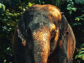 elefantes asia elefante trompa