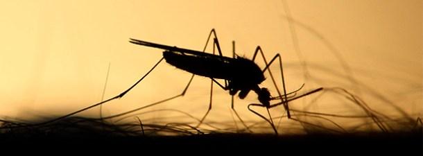 Las picaduras de los mosquitos, sus efectos y por qué inflaman la piel