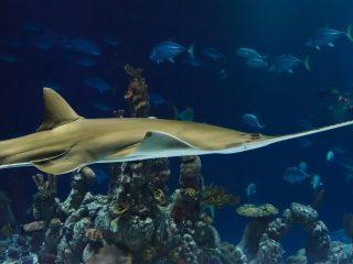 Tiburón, peces híbridos, animales