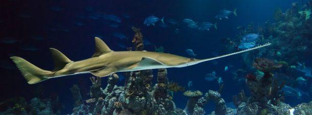 Científicos crean por accidente una especie híbrida de peces