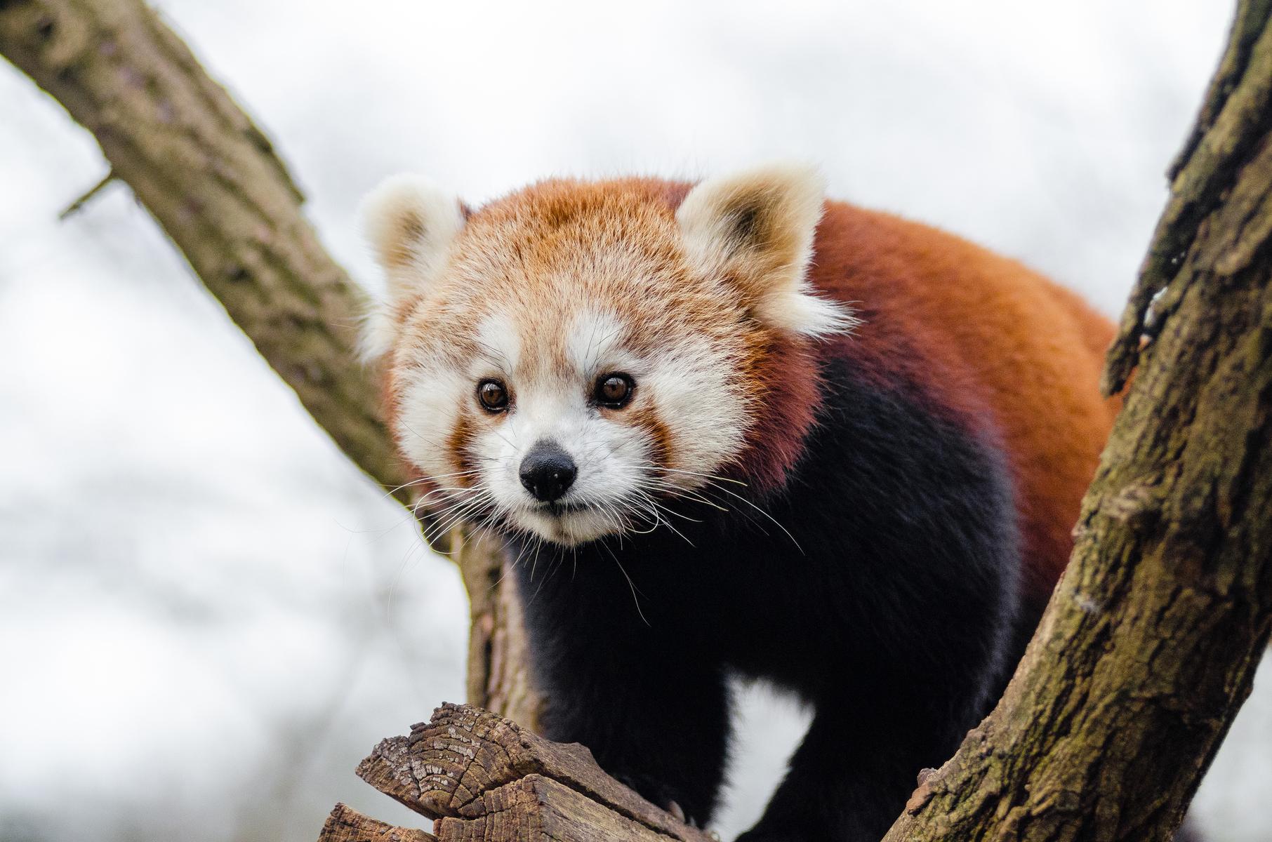 ¿Puede la tecnología salvar a las especies en peligro de extinción?