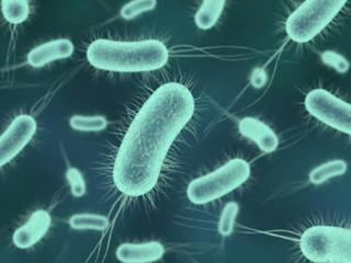 microbios, bacteria, resucitar