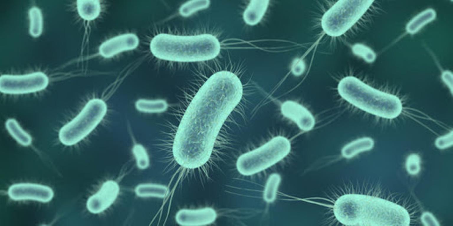 Un laboratorio de Japón consigue resucitar microbios de cien millones de años
