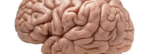 Crean la primera interfaz cerebral inalámbrica