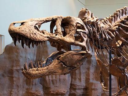 La vida media del ADN impedirá la clonación de dinosaurios